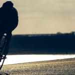 www.free-wheels.de #free_wheels_shop, #pillnach, FreeWheels_Wirüberuns